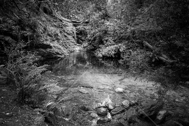 """The pool, Knysna Forest - B&W"""