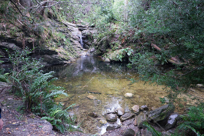 """The pool, Knysna Forest - colour"""